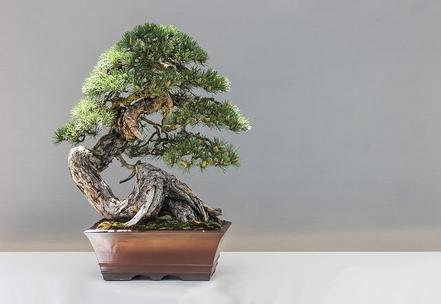 výstava bonsai na zámku Libochovice